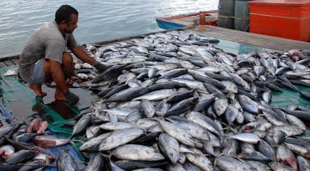 Potensi Ikan Mimika Jadi Perhatian KKP