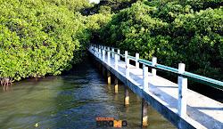 jembatan mangrove di pantai bama baluran jawa timur