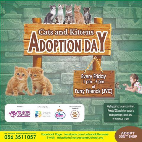 Jvc Community Jumeirah Village Circle Dubai Cats And Kittens Adoption Day At Furry Friends Jvc