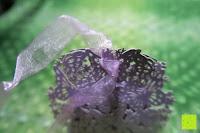 Schleife binden: 50pcs Wedding Candy Boxes Butterfly Laser Cut Kartonage Schachtel Bonboniere Geschenkbox Hochzeit (Purple)