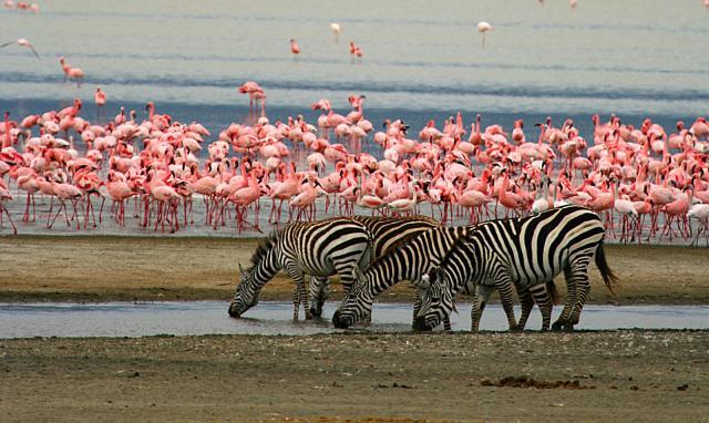 Découvrir le parc national du Lac Manyara - Animaux d'afrique- Beaux paysages Tanzanie