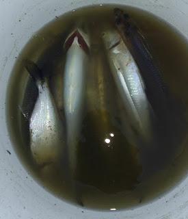 Pesca Marcelo Lissarague