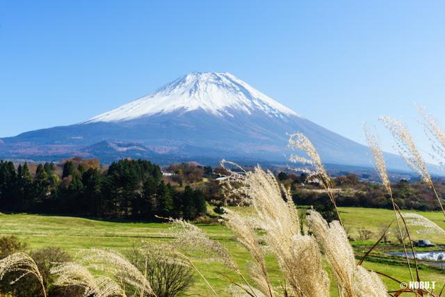 ススキと富士山~富士ヶ嶺