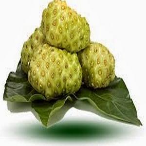 manfaat herbal, sehat alami, jamu hijau, life insurance