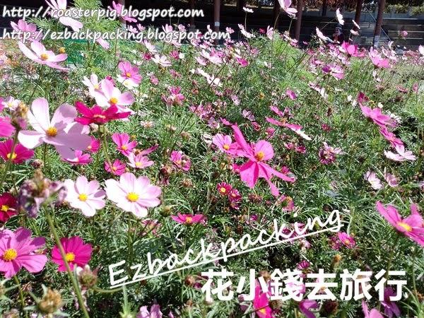 香港賞花冬季篇:北區公園