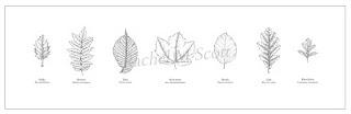 Leaves: A series of 7, stipple illustration by Rachel M Scott