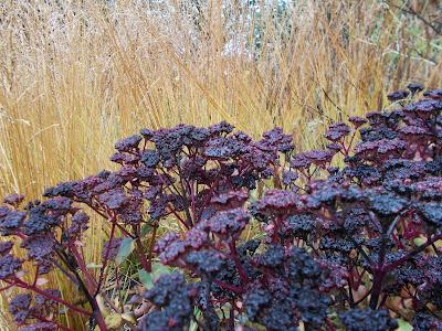 Autumn Grasses & Perennials Green Fingered Blog