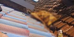 Sesosok Mayat Ditemukan di Atap Genteng Rumah Hebohkan Warga