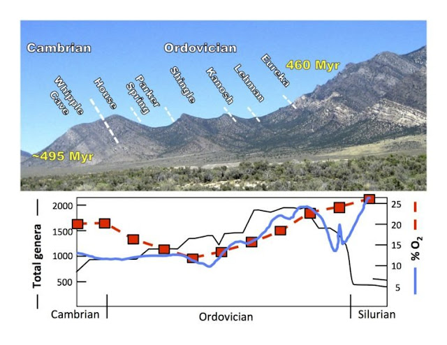 Oxygen levels link to ancient explosion of life, researchers find