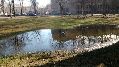 Montrèal au parc La Fontaine
