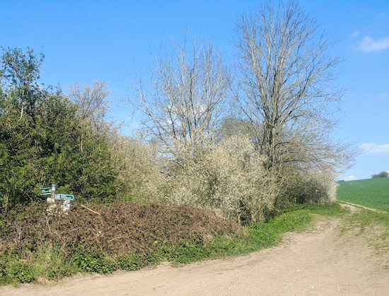 Turn right on Braughing bridleway 6 when the lane bends left