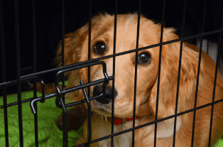 Best Crate For Dog With Separation Anxiety
