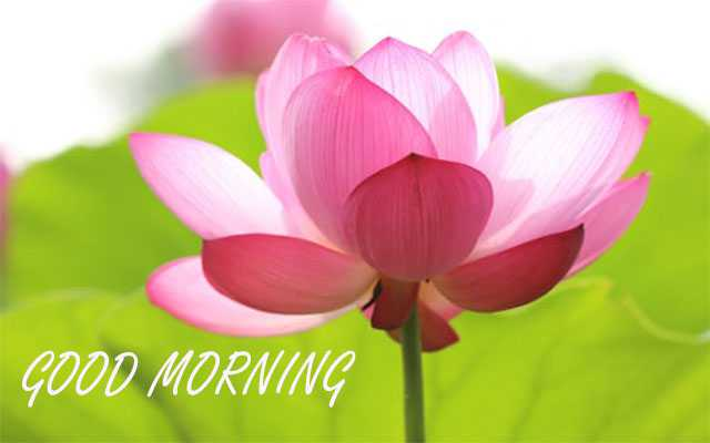 Good Morning Different Flower Images Free Download