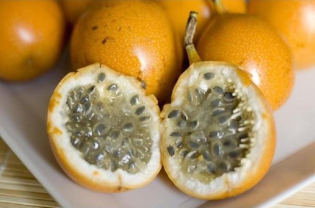 Bibit Benih Biji Buah Markisa Oren Orange Passion Fruit Kaya Manfaat Isi 10 Biji Langsa