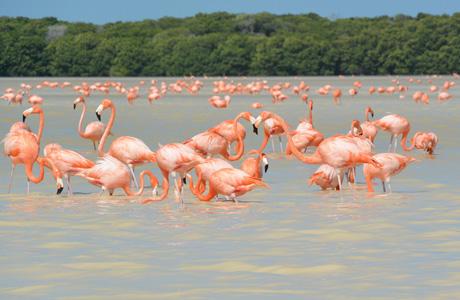 Celestún, Flamencos, Hotel Xixim, Mérida, Yucatán, donde ver flamingos en yucatan, celestun yucatan, Hotel Xixim, Merida, Hotel Hacienda Xcanatún