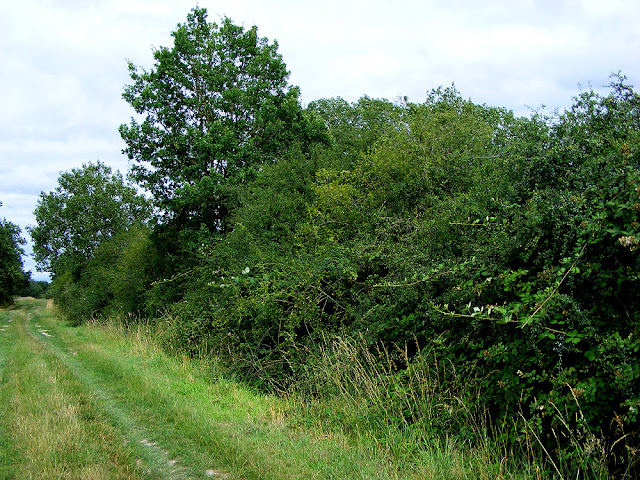 Rural track bounded by a ditch and wild hedge. Indre et Loire. France. Photo by Loire Valley Time Travel.