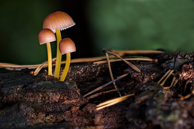 Benefit Of Micorrhizal Fungus