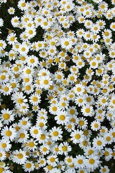 iphone sangung galex flores plano de fundo papel de parede celular tumblr pinterest flores