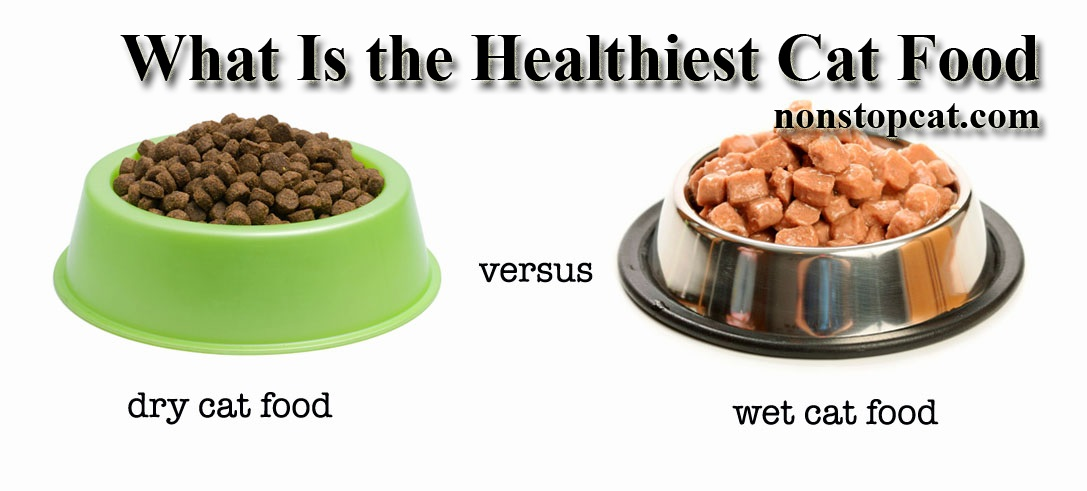 What Is the Healthiest Cat Food