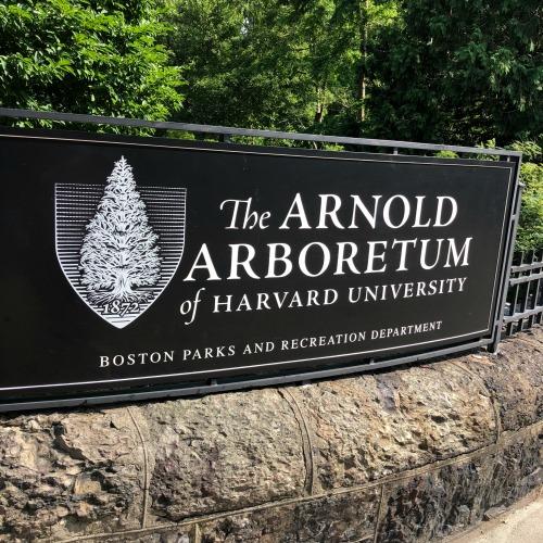 Arnold Arboretum Boston MA