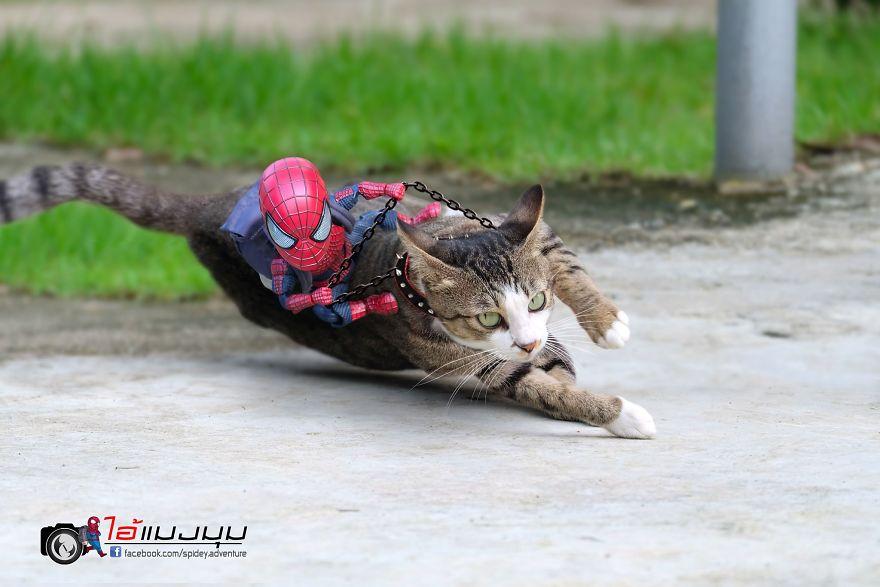 12 Gambar Lucu Antara Spiderman Vs Kucing