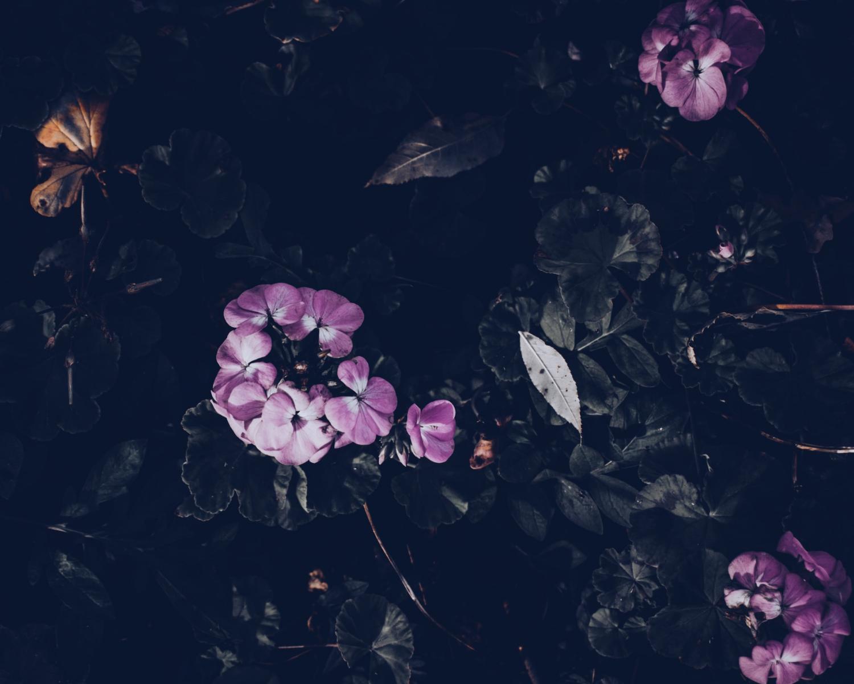 Rose su fondo nero
