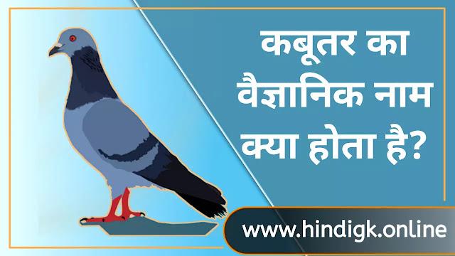 कबूतर (kabootar) का वैज्ञानिक नाम क्या है?