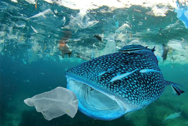 sampah plastik mengancam hewan di laut