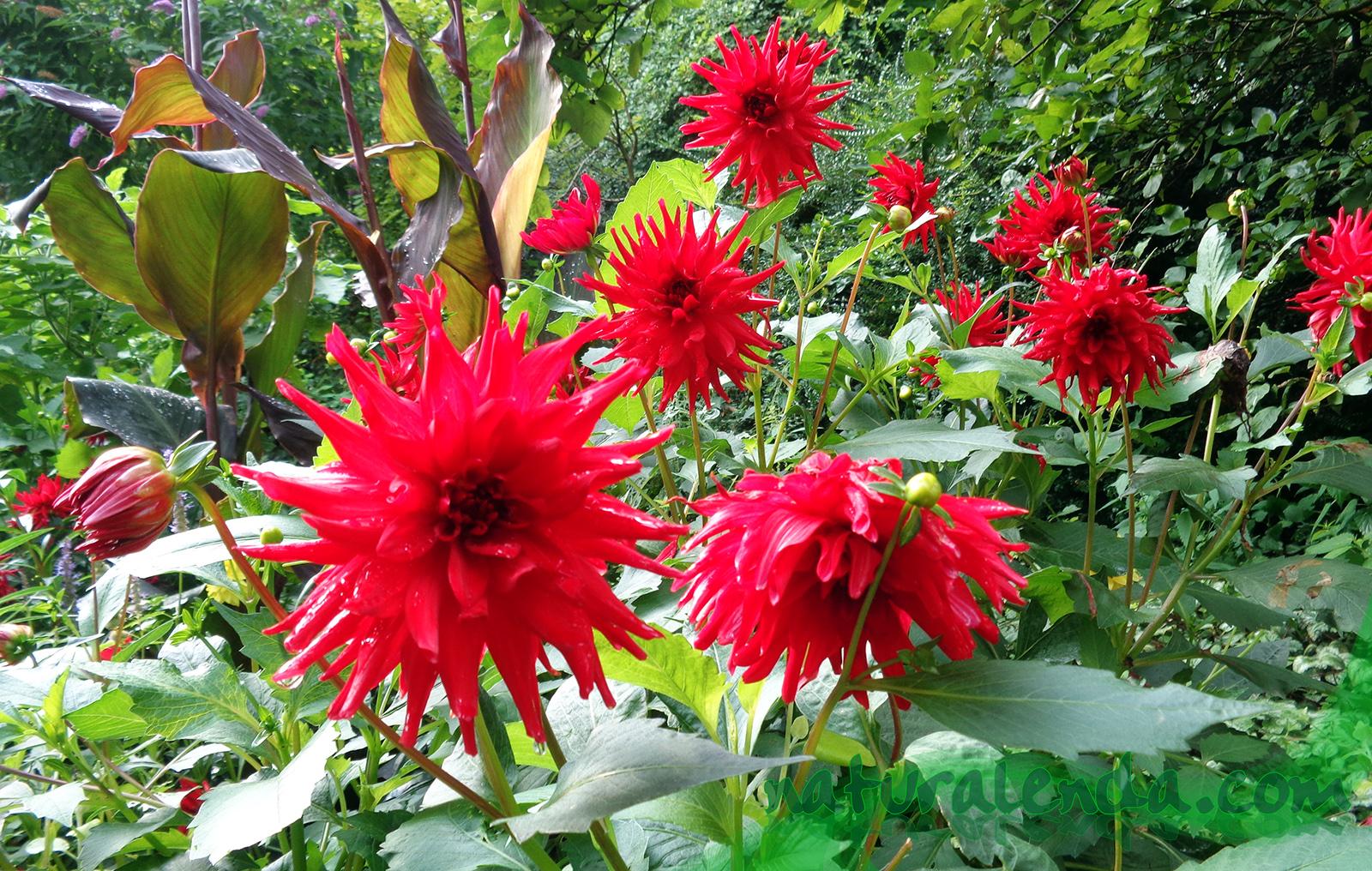 flores en Muenster