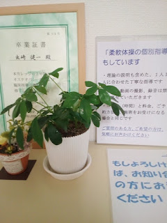 観葉植物の画像(植え替え後)1