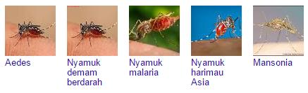 Beberapa Jenis Nyamuk Mematikan
