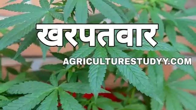 खरपतवार (kharpatwar) क्या है, खरपतवार की परिभाषा, kharpatwar kise kehte hain, weed in hindi, खरपतवारों की विशेषताएं, खरपतवार नियंत्रण की विधियां
