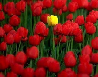 diferente, única, flores, flor