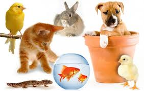 Which animals are pets?