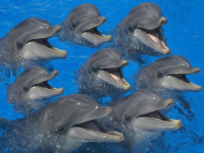 Simpatica foto de ocho delfines