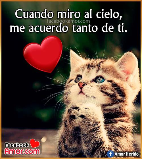 imágenes tiernas de gatos amor