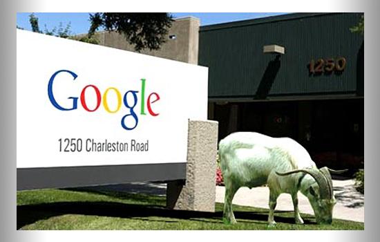 7 Curiosidades sobre o Google - Cabras cortadoras de grama do Google