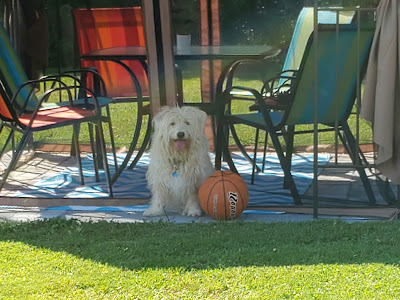 Cooper just wants to play ball, while Rosey stays in the shade!