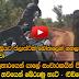 Elephant in sri lanka Sri lankan Wilde Life