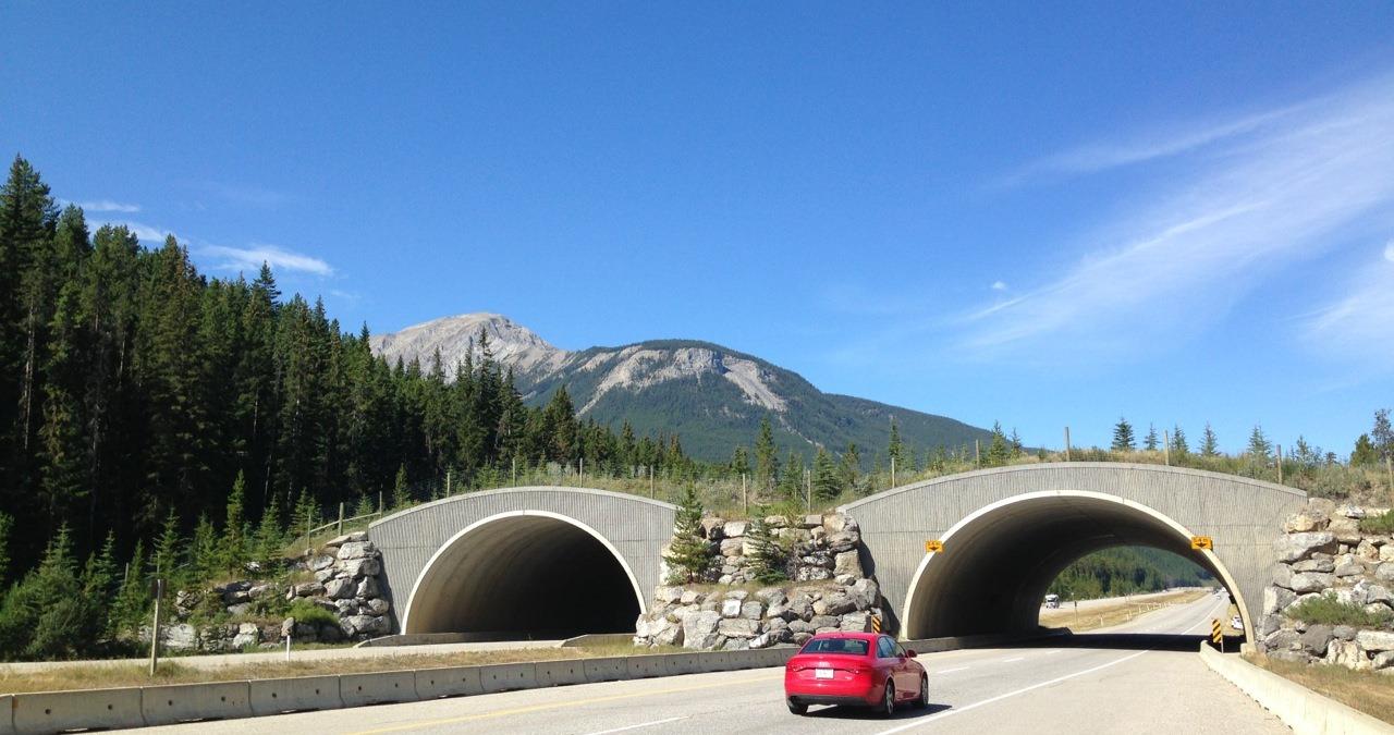 Wildlife Overpass
