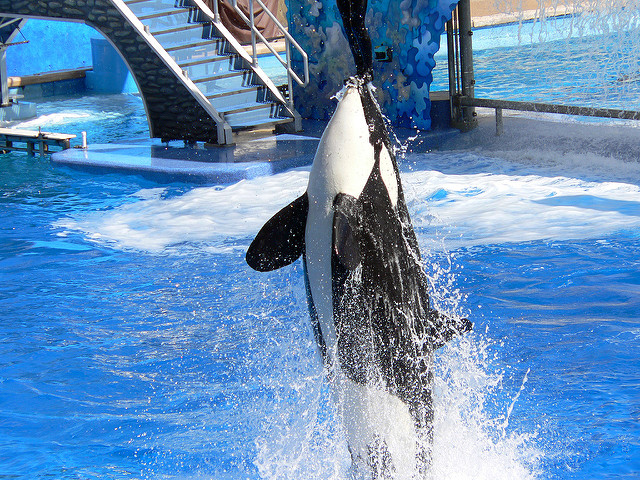 Image: Sea World - Shamu Stadium, by Stig Nygaard on Flickr