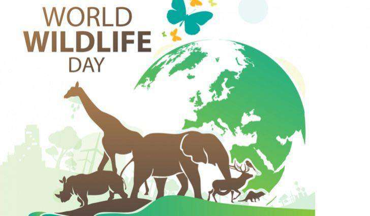 World Wildlife Day Wishes Awesome Images, Pictures, Photos, Wallpapers