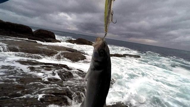 "ROBALIZA%2B1 - Costa da Morte ""la pesca de la lubina en Galicia"""