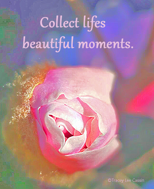 Collect Life's Beautiful Moments Quote