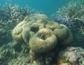 Bawah laut Anambas