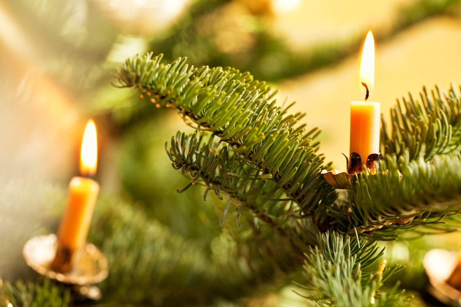 Albero Di Natale Yule.Le Erbe Di Ygraayne Yule L Abete E L Albero Di Natale