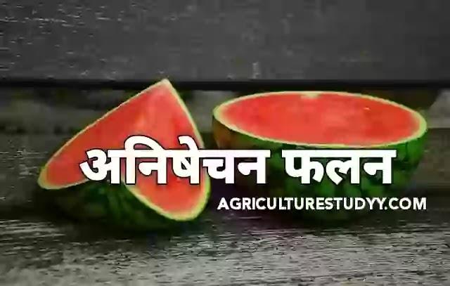 अनिषेक फलन ( Parthenocarpy in Hindi )