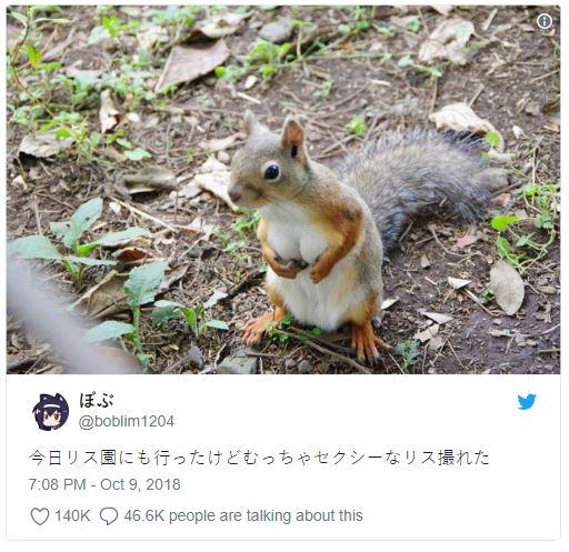 Viral! Media Sosial Jepang Terkejut Melihat Tupai Mempunyai 'Payudara'