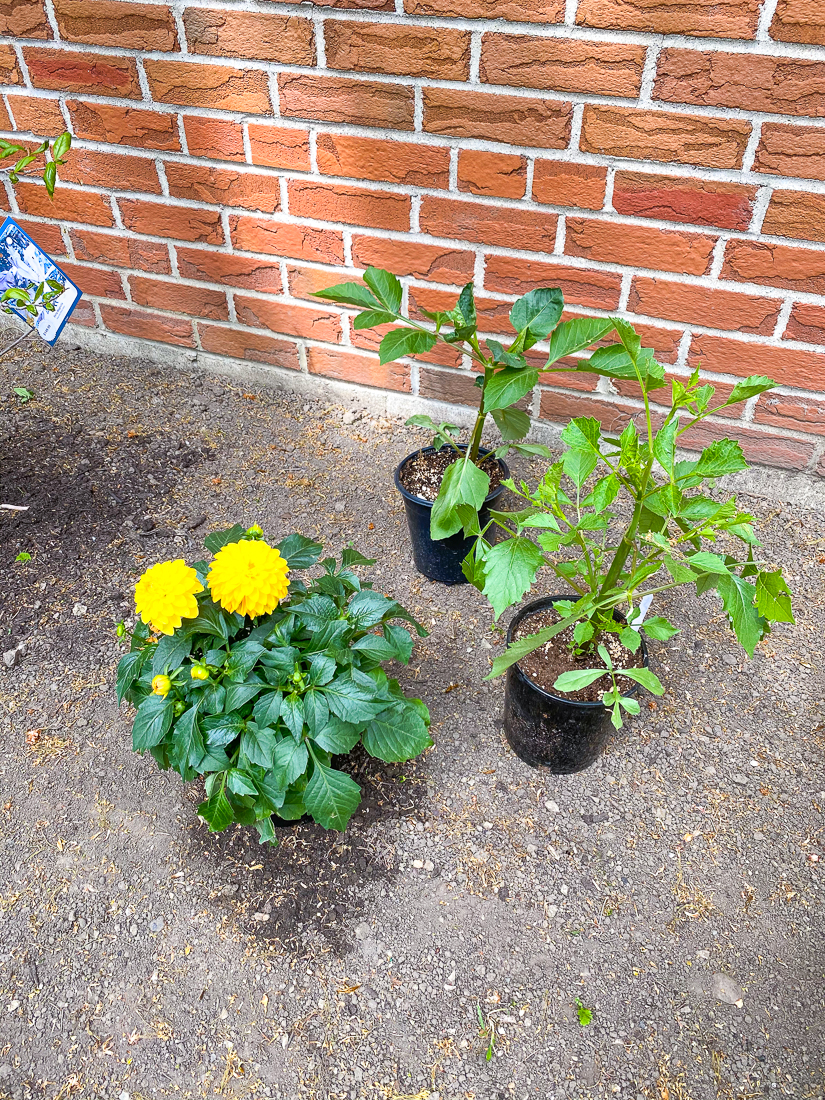 back garden plants