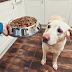 ΥΠΕΡΒΟΛΙΚΗ ΠΟΣΟΤΗΤΑ ΒΙΤΑΜΙΝΗΣ D! Ανακλήσεις προϊόντων και θάνατοι σκύλων...